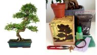 Chinese Elm Complete Bonsai Growing Kit - Soil/Pots/Seeds2x/Wire/Fertilzer/Mesh/
